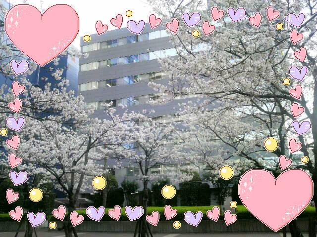 実家の桜逹