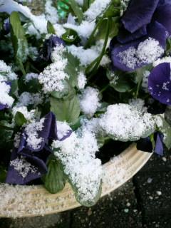 また雪です(+_+)