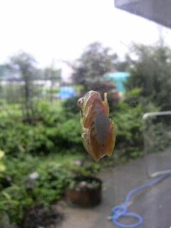 蛙のダメな人注意!