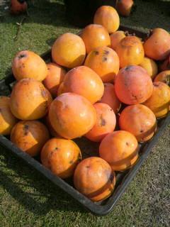 柿と筋トレ