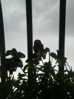 雷だぁ〜(<br />  ;´△`)