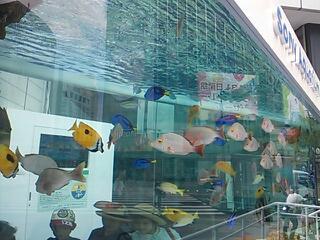 銀座の水族館♪