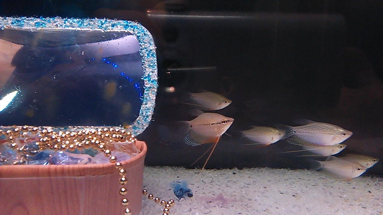 エキマエ水族館